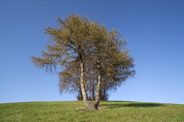 albero_todesci