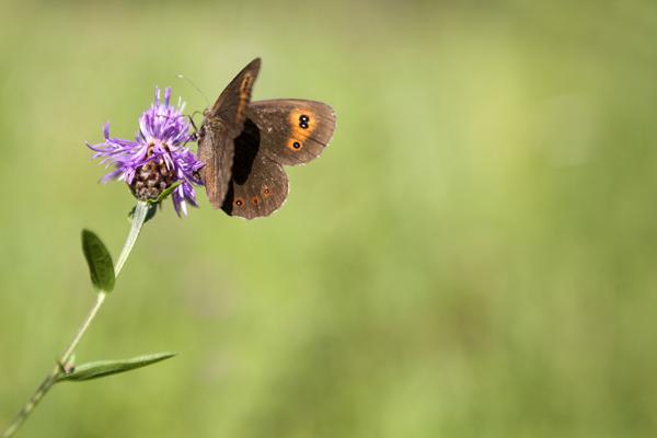 Fiore+farfalla